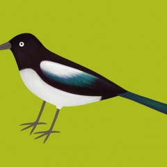 Cheeky Magpie